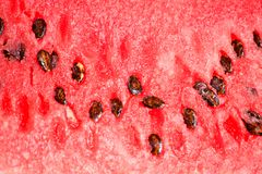 Watermelon delicious cut food dessert Stock Image
