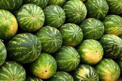 Watermelon display Stock Images