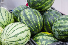 Watermelon on display in bulk at the market. Water melon on display at the farm market in bins Royalty Free Stock Photos