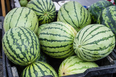 Watermelon on display in bulk at the market. Water melon on display at the farm market in bins Stock Photography