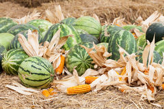 Watermelon and dry corn Royalty Free Stock Photography