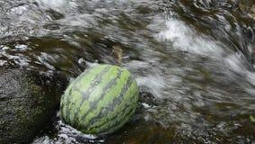 Watermelon in fast stream stock video