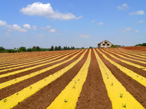 Watermelon field with plastic cover Israel Stock Photo