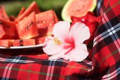 Watermelon flower and tablecloth Royalty Free Stock Photography