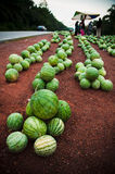Watermelon Fruit. Watermelon fresh from farm being sold at the road side Royalty Free Stock Image