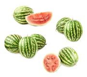 Watermelon fruit compositions Stock Photography