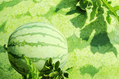 Watermelon fruit Royalty Free Stock Images