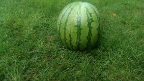 watermelon on grass Royalty Free Stock Photo
