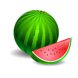 Watermelon green on a white background Stock Image
