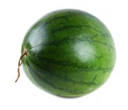 Watermelon. Green watermelon on white isolated background stock image