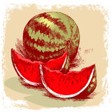 Watermelon hand drawn. illustration Stock Photography