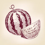 Watermelon hand drawn vector llustration realistic Stock Photography