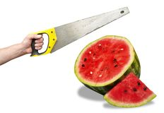 Watermelon and hand with hacksaw Stock Photo