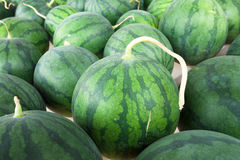 Watermelon after harvesting Royalty Free Stock Photography