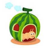 Watermelon house Stock Photos