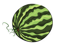 Watermelon illustration Stock Photography