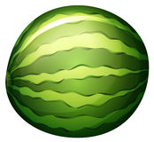 A watermelon. Illustration of a watermelon on a white background royalty free illustration