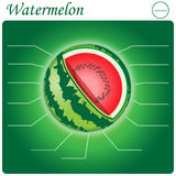 Watermelon Infogram Stock Photo