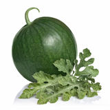 Watermelon with leaves isolated Royalty Free Stock Image