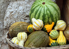 Watermelon, melons and different small squashes Royalty Free Stock Image