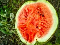 Watermelon Juicy Closeup royalty free stock image