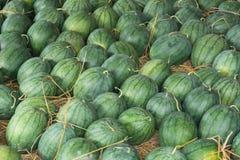 Watermelon. On the open market royalty free stock photos