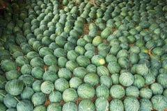 Watermelon. On the open market stock photos