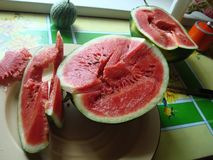 Watermelon ordinary lat. Citrúllus lanátus is an annual herb, a species of the genus Watermelon Citrullus of the Pumpkin famil royalty free stock images