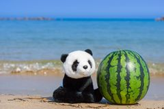 A cute panda stuffed toy sitting beside a whole watermelon on the beach with blue ocean in summer. royalty free stock photo