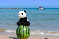 A cute panda stuffed toy sitting on a whole watermelon on the beach with blue ocean in summer. royalty free stock photos