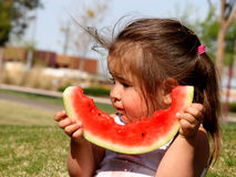 Watermelon in the Park Stock Photos