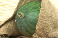 Watermelon partially pop out of old agriculture sack Stock Photography