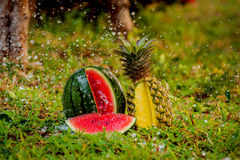 Watermelon and pineapple in the garden Royalty Free Stock Image