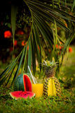 Watermelon and pineapple in the garden Royalty Free Stock Photos