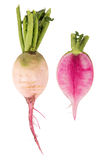 Watermelon radish over white background Royalty Free Stock Images