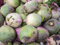 Watermelon radish Royalty Free Stock Images