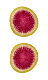 Watermelon Radish Slice Isolated clipping path Stock Photography