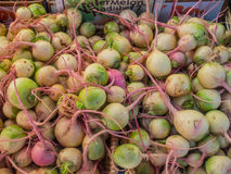 Watermelon radishes Royalty Free Stock Images