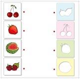 Watermelon, raspberries, cherries and strawberries. Educational Stock Photos