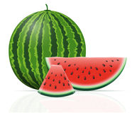 Watermelon ripe juicy vector illustration Royalty Free Stock Photography