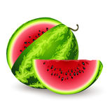 Watermelon. Ripe watermelon on a white background Royalty Free Stock Photos
