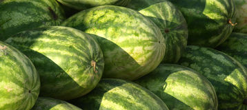 Watermelon for sale. At the market during the summer Royalty Free Stock Image