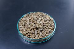 Watermelon seed on black background on plate stock photos