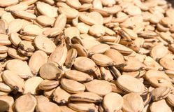 Watermelon seeds. Background of brown watermelon seeds Royalty Free Stock Image