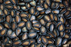 Watermelon seeds. Dry natural black watermelon seeds Stock Photos