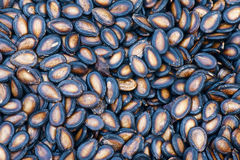 Watermelon seeds Stock Photos