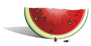 Watermelon with seeds. Red Watermelon with alive seeds Stock Image