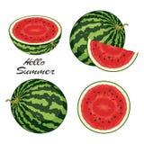 Watermelon set. vector  Stock Photos