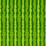 Watermelon skin texture background. Stock Photo