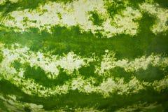 Watermelon skin texture. Close up of watermelon skin texture.Watermelon rind and stripes royalty free stock photos